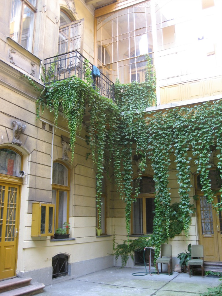 the falling ivy in the courtyard of the studio building