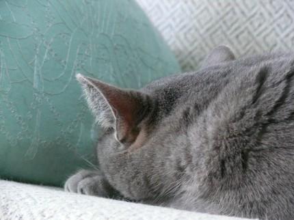 Juni asleep
