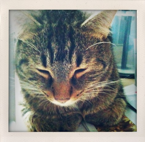 the iphone has a polaroid app called ShakeItPhoto...here's Wobbly Bob all hunkered down (aka THE BEAST!)