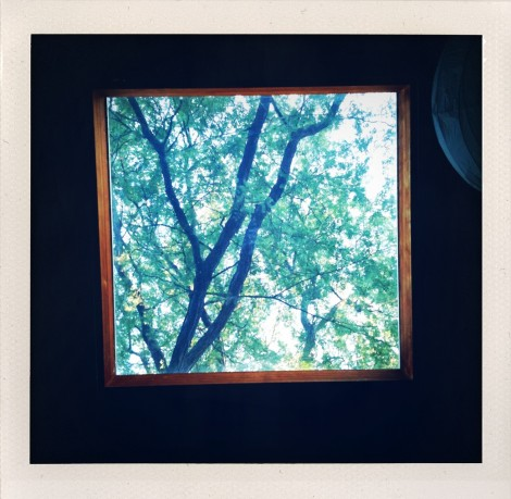 black locust skylight