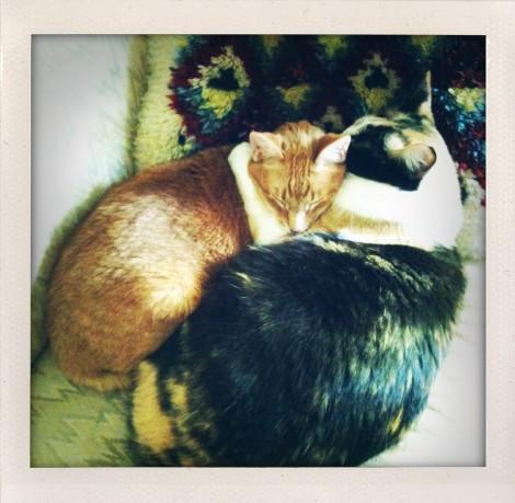 kitty unity